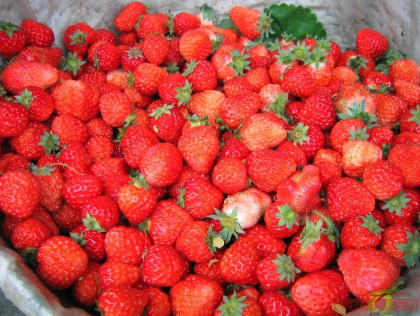 草莓保鲜袋.jpg