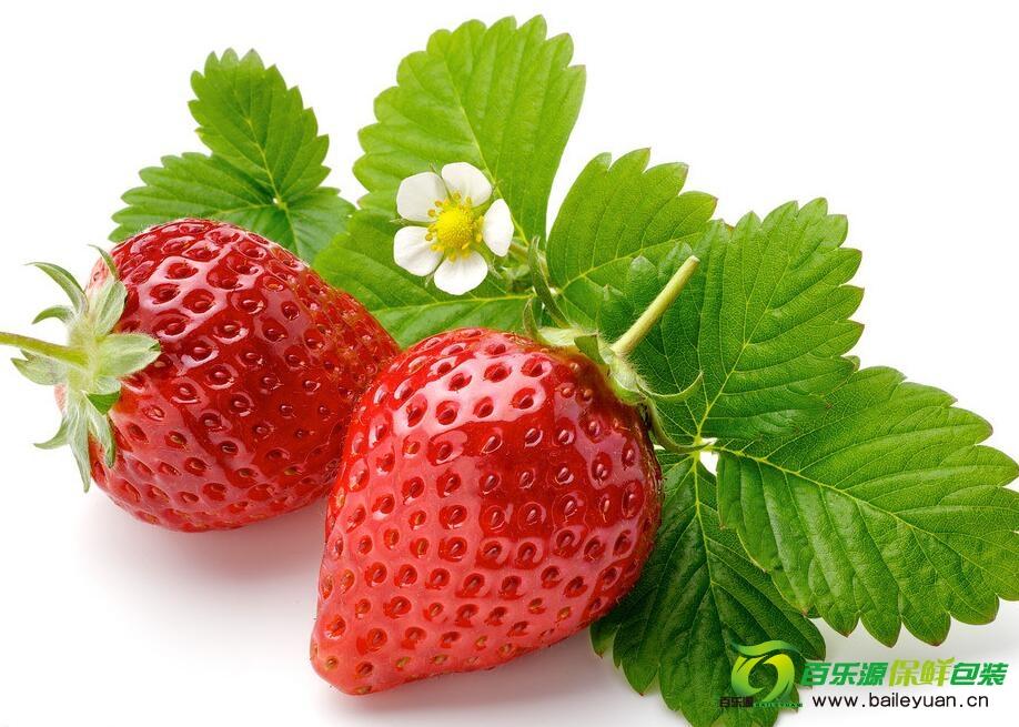 草莓种植方法 | 草莓种子播种技术 | 草莓栽培方法!