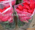 百乐源透气袋 花卉专用