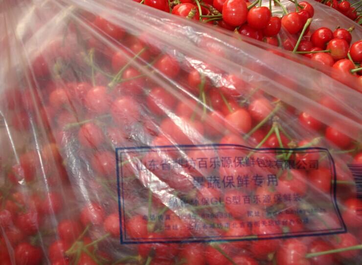 樱桃的采收和保鲜储藏技术指导