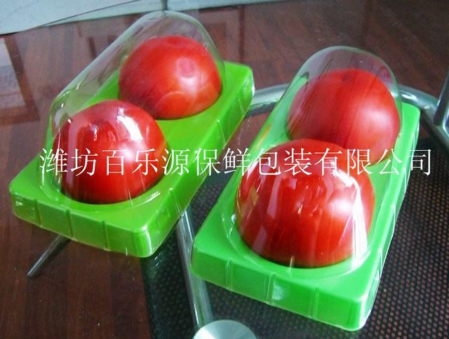 西红柿专业beplay体育登陆盒